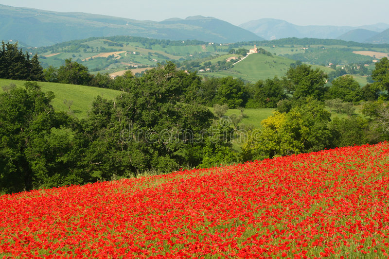 Poppy and church royalty free stock image