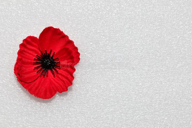 Poppy on a clean copy space for Anzac or Remembrance Day. Poppy which is a symbol Anzac Day or Remembrance Day with a clean background or copy space royalty free stock images