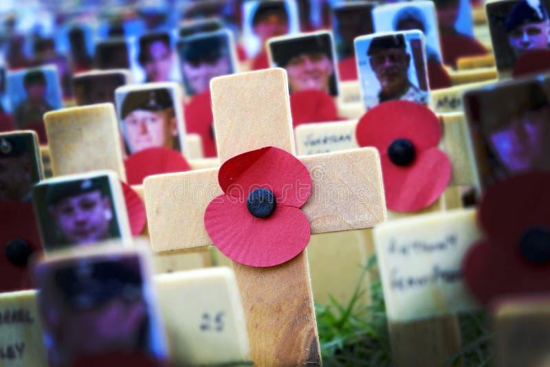 Poppy Cross minnedagskärm royaltyfri bild