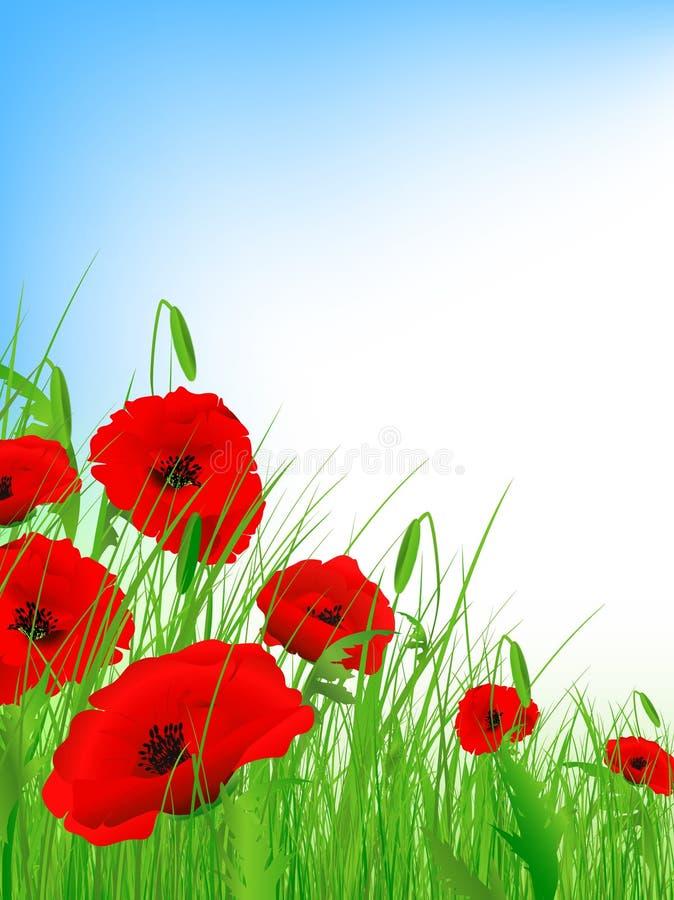 Free Poppy Field Stock Image - 14229531