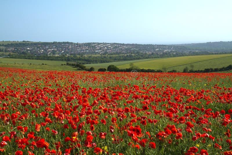 Poppy Field and Brighton royalty free stock photos