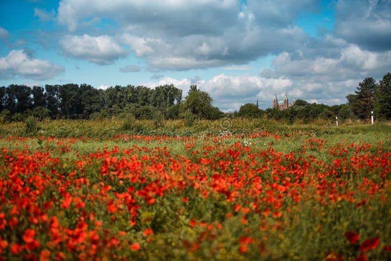 Poppy Field e catedral de Speyer imagem de stock royalty free