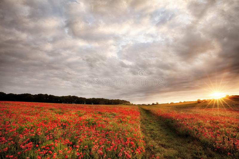 Poppy field landscape at sunrise. Poppy landscape scene with sunrise and clouds royalty free stock photography
