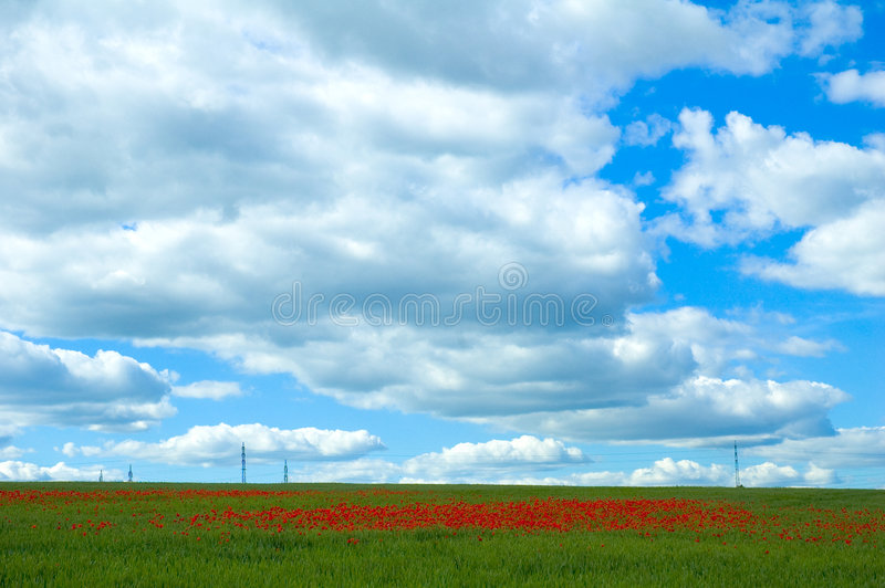 Download Poppy Field With Powerlines Stock Image - Image: 239861