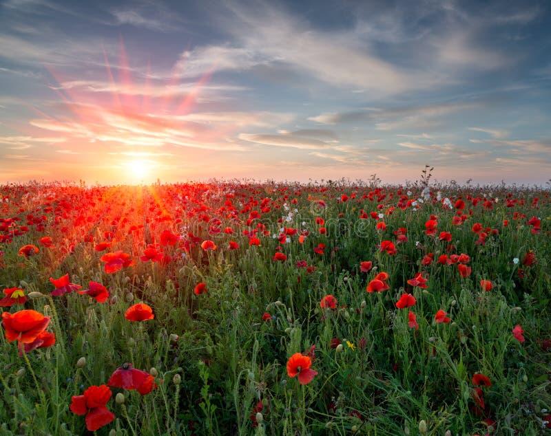 Poppy Field Sunset foto de archivo libre de regalías