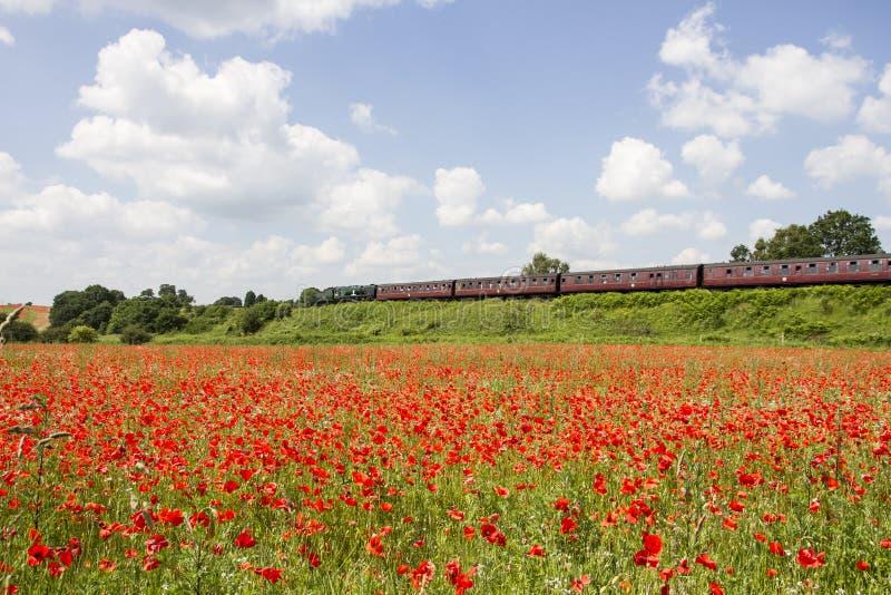 Poppy Fields u. Severn Valley Railway, nahe Bewdley stockbilder