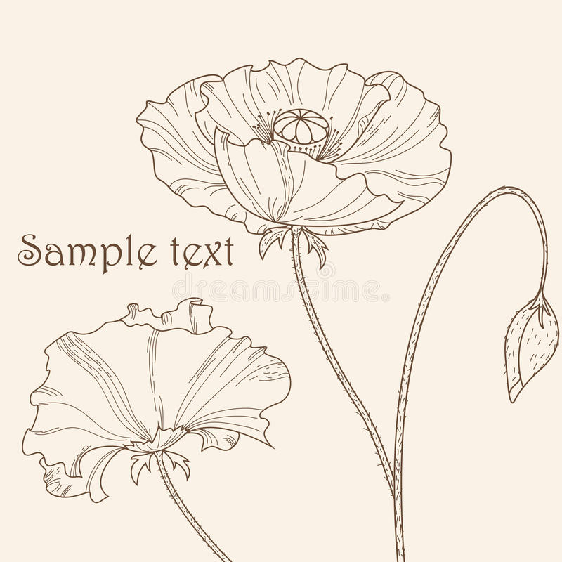 Poppy flower vector illustration