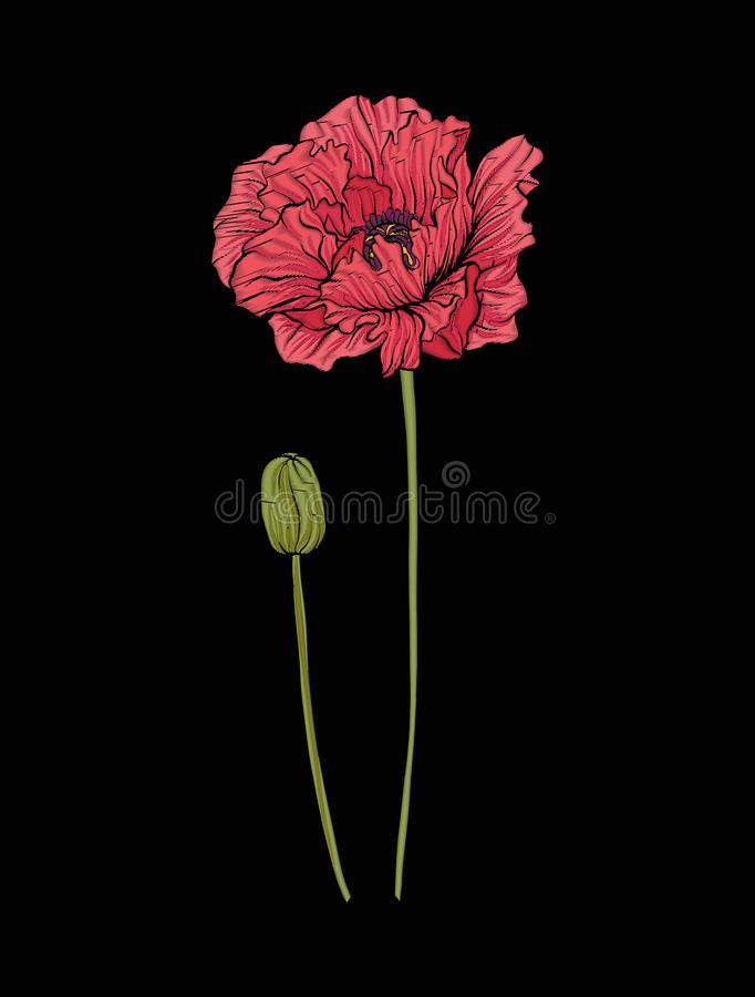 Poppy flower for embroidery in botanical illustration style on a vector illustration