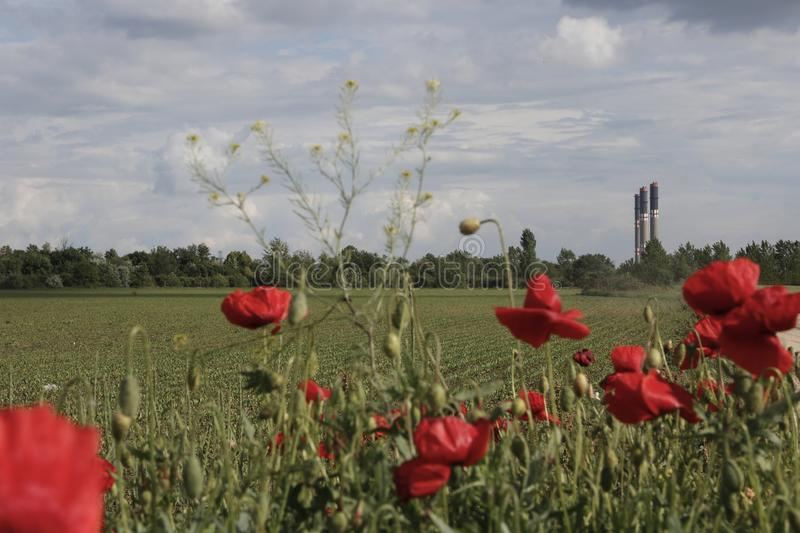 Remote factory chimneys in poppyseed flowers and cloudy landscapes royalty free stock photos