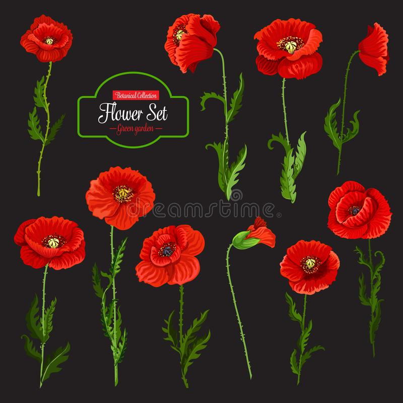 Poppy flower icon of red wildflower and green leaf vector illustration