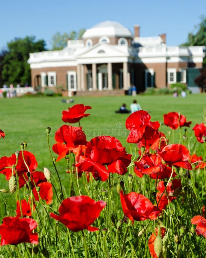 Poppy flower in Monticello