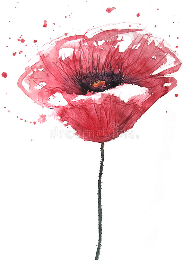 Poppy flower, watercolor. Made by me stock illustration