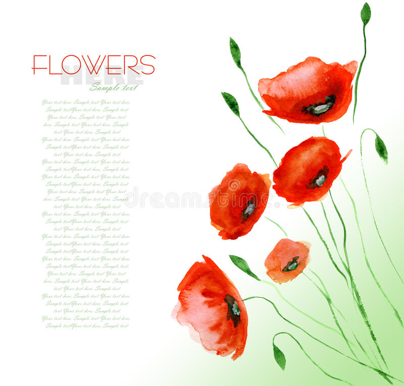 Poppy Flower Watercolor stock illustration