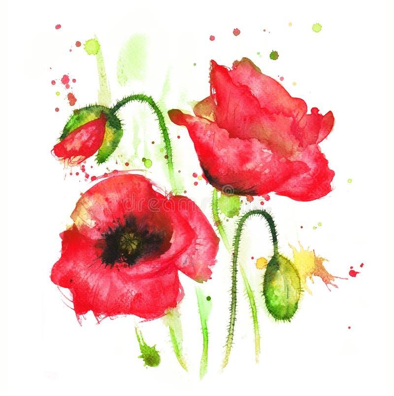 Poppy flower stock illustration