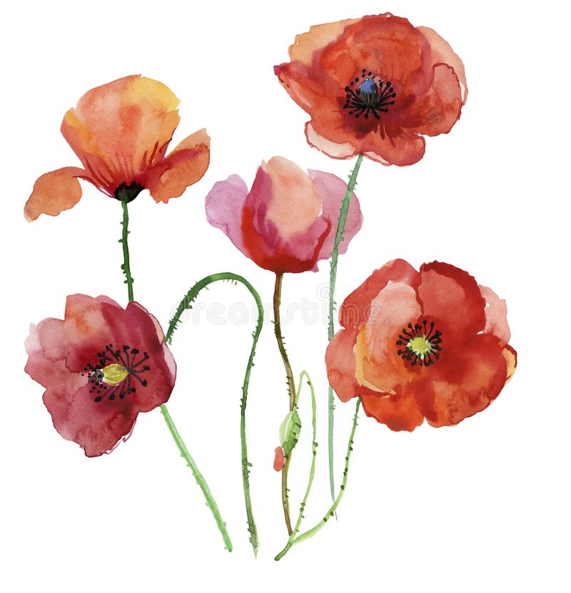Poppy flowers watercolour illustration stock illustration download poppy flowers watercolour illustration stock illustration illustration of bright handmade mightylinksfo