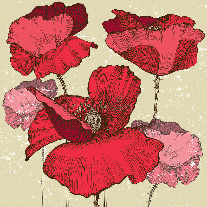 Poppy flowers stock illustration