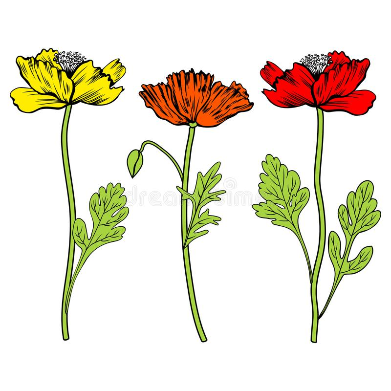 Poppy flowers, bud, leaves vector hand drawn colorful illustration isolated on white, floral design set for greeting royalty free illustration