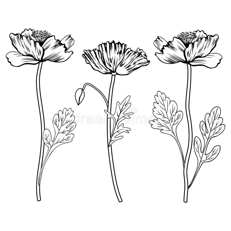 Poppy flowers, bud, leaves vector hand drawn outline illustration isolated on white, ink sketch floral design set for vector illustration