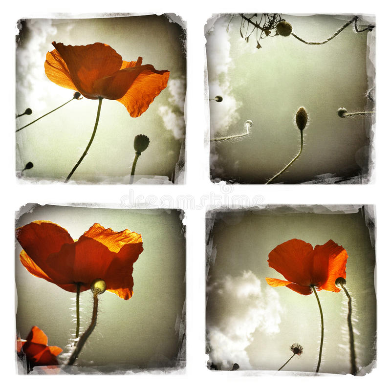 Poppy flowers collage vector illustration