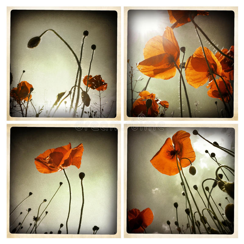 Poppy flowers collage stock illustration