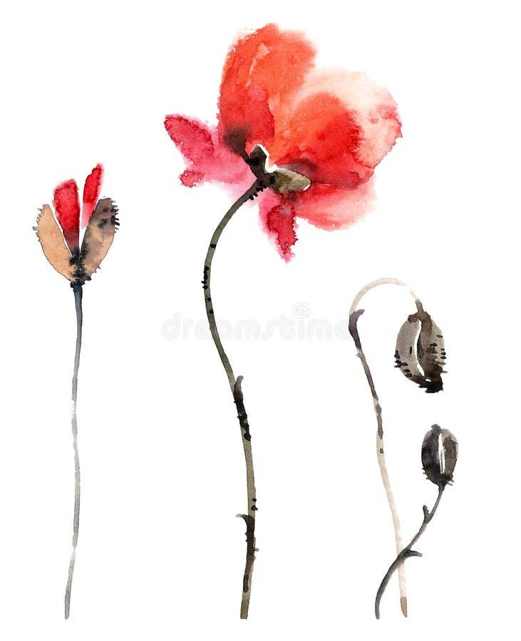 Poppy. Flowers illustration.. stock illustration