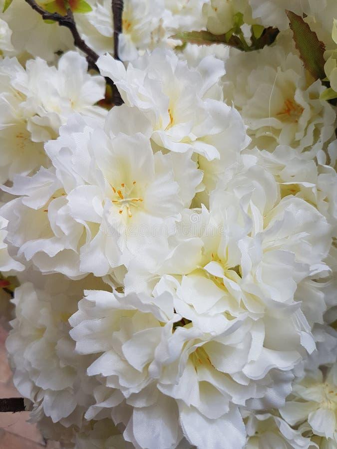 White plastic poppy flowers stock image image of petals petunias download white plastic poppy flowers stock image image of petals petunias 114045087 mightylinksfo