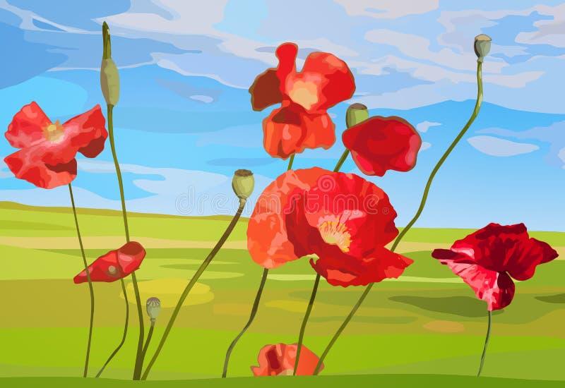 Poppy flowers. Poppy red flowers on field background royalty free illustration