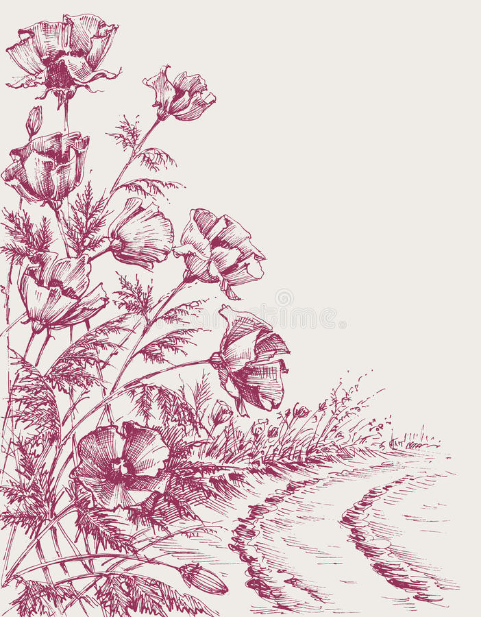 Poppy flowers on the road. Hand drawing. Summer background design royalty free illustration