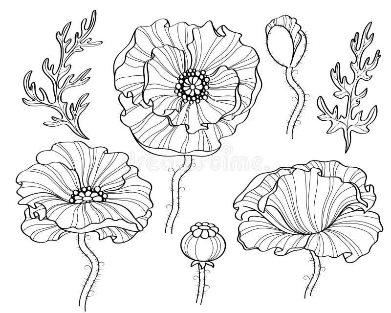 Poppy Flowers Svartvit illustration Linje konst royaltyfri illustrationer