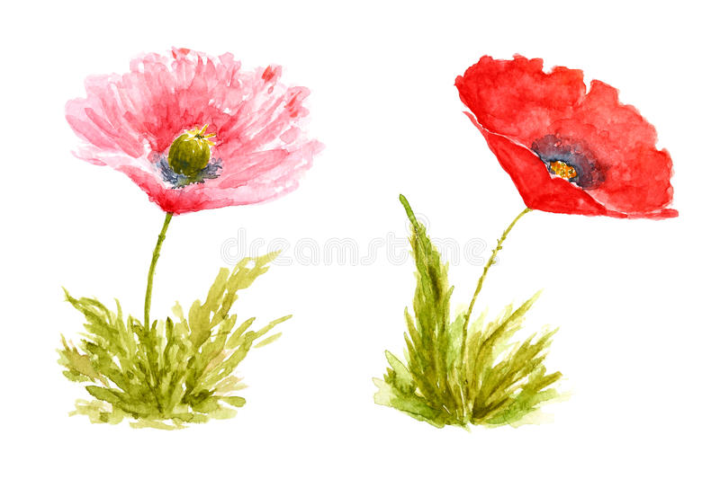 Poppy Flowers Watercolor Hand Drawn and Painted vector illustration