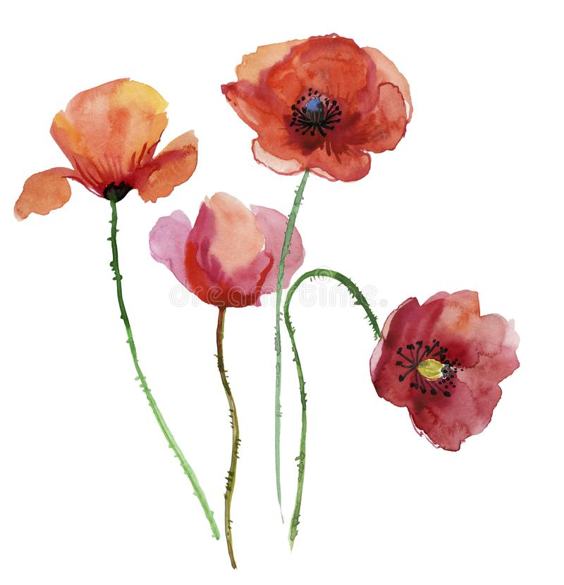 Poppy flowers watercolour illustration stock illustration download poppy flowers watercolour illustration stock illustration illustration of impressionism creation mightylinksfo