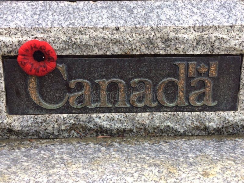 poppy kanadyjski zdjęcie royalty free