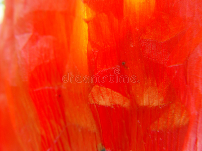 Download Poppy leaf 1 stock photo. Image of macro, yellow, poppy - 11224