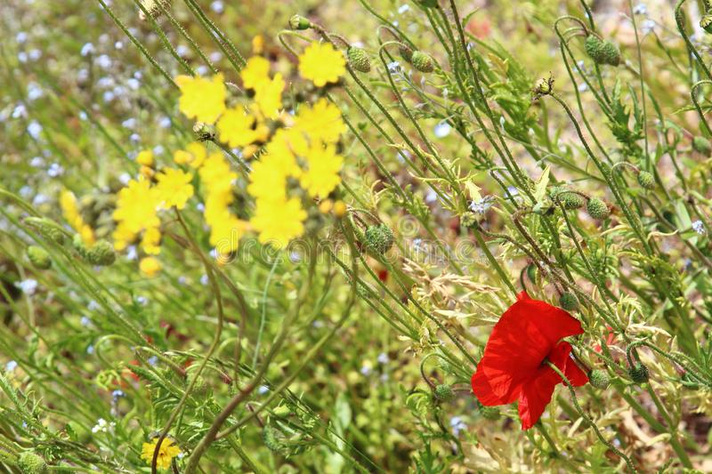 Red and yellow flowers in the Isere Region, France stock photos