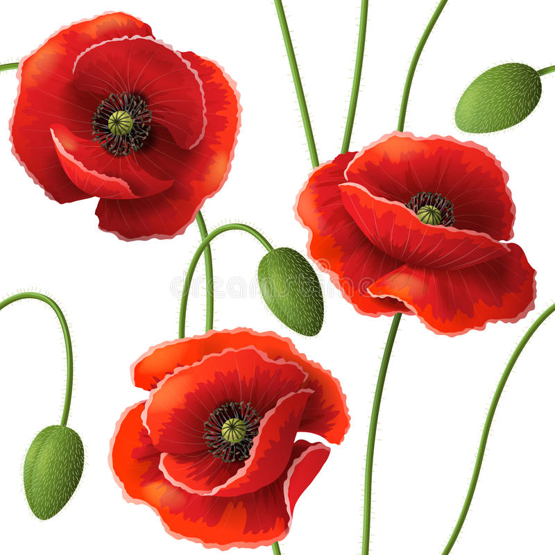 Poppy pattern. Seamless pattern with red poppy flowers and buds on white vector illustration