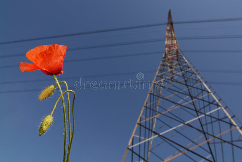 poppy pilon zdjęcia royalty free