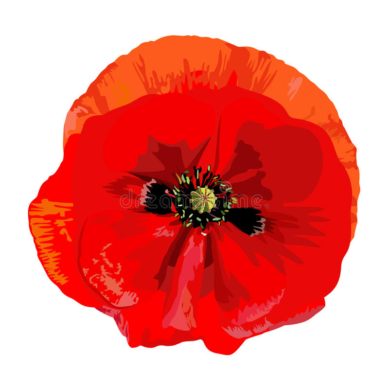 Poppy red. Drawing a single red poppy royalty free illustration