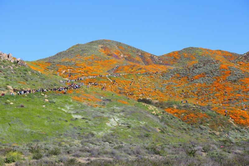 Poppy Super Bloom Visitors On anaranjada y del rastro en Walker Canyon en el lago Elsinore, CA imágenes de archivo libres de regalías