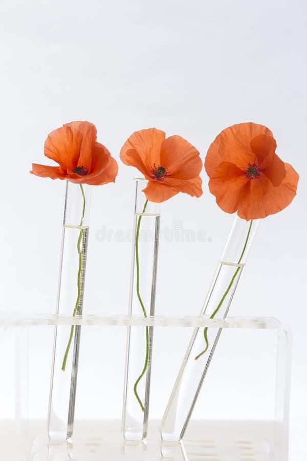 Poppy in in test tubes stock image