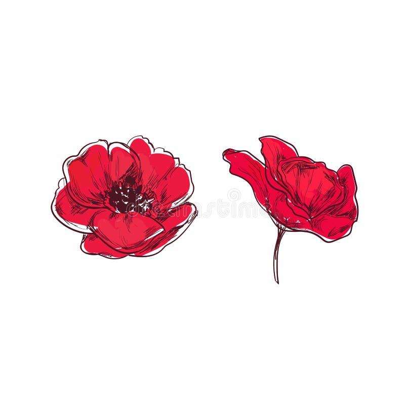 Poppy vector hand drawn cartoon style stock vector illustration download poppy vector hand drawn cartoon style stock vector illustration of decorative mightylinksfo