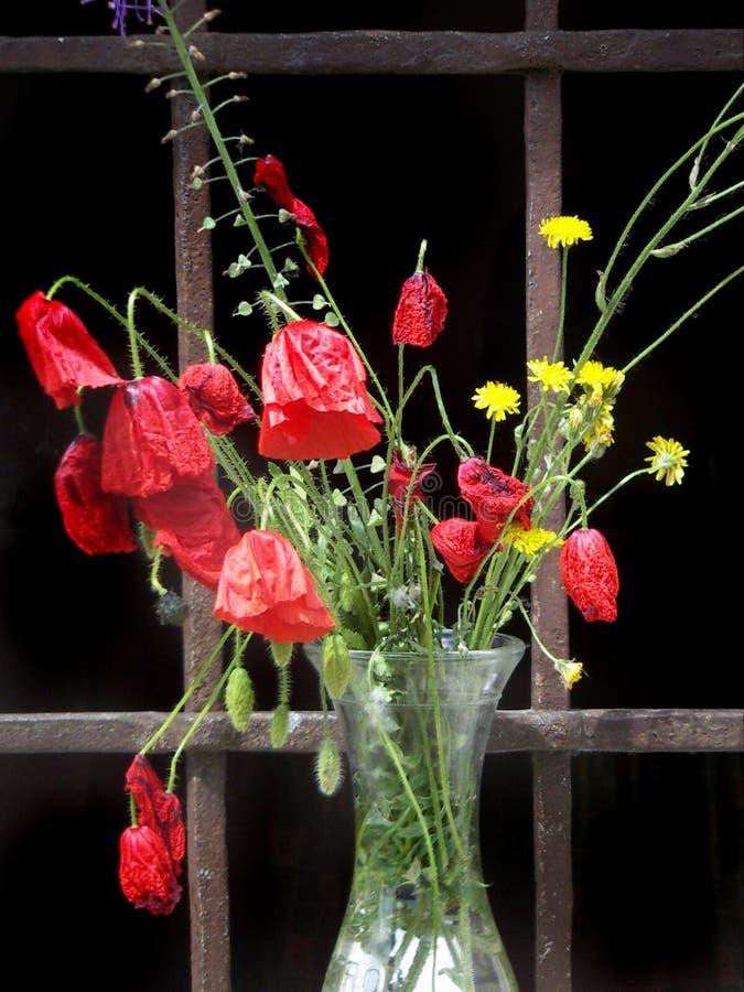 Poppyflowers em um vaso de vidro imagem de stock