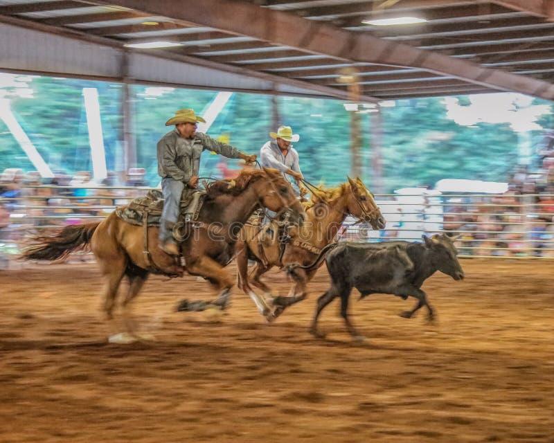 Populära rodeohändelseviloläge royaltyfria bilder