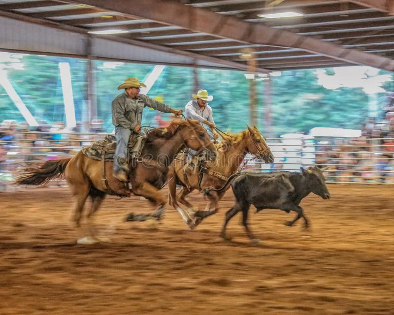Popular rodeo event steer wrestling. royalty free stock images