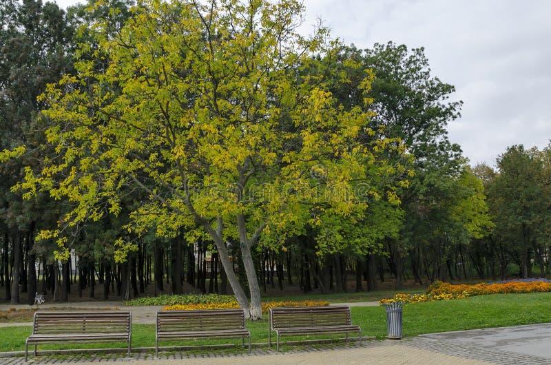 Popularny północ park dla odpoczynku z jesiennym starym lasem, drewnianą ławką i kwiatu ogródem w Vrabnitsa okręgu, zdjęcia stock