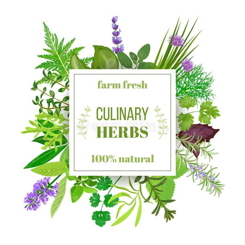 Popularnych Kulinarnych ziele duży set z szlagonu emblematem ilustracja wektor
