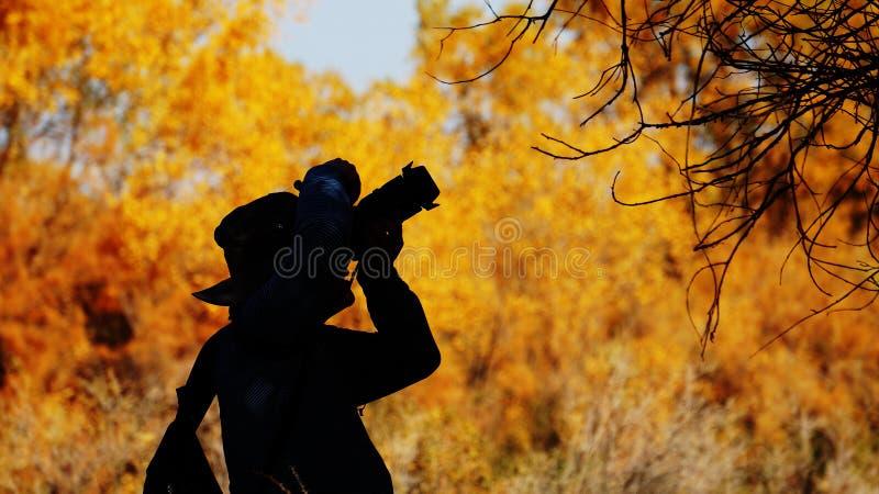 Populus euphratica las w Xinjiang zdjęcie royalty free
