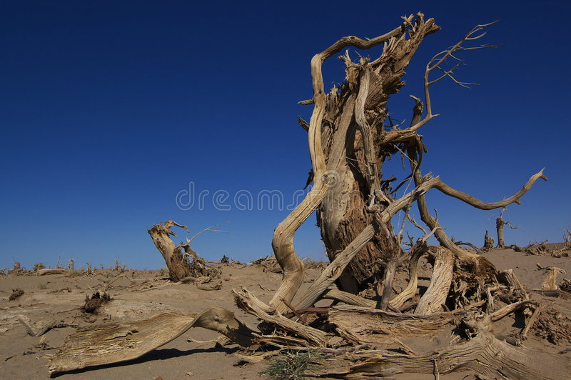 Populus mort de Diversifolia photo stock