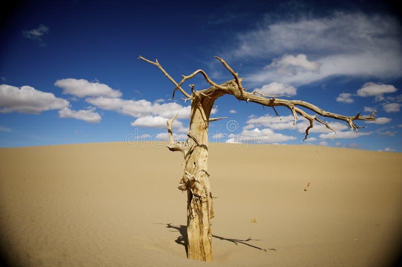 Populus tot in der Wüste. lizenzfreie stockfotos