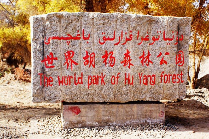 Populuseuphratica: de heldenboom in de Taklimakan-Woestijn stock afbeeldingen