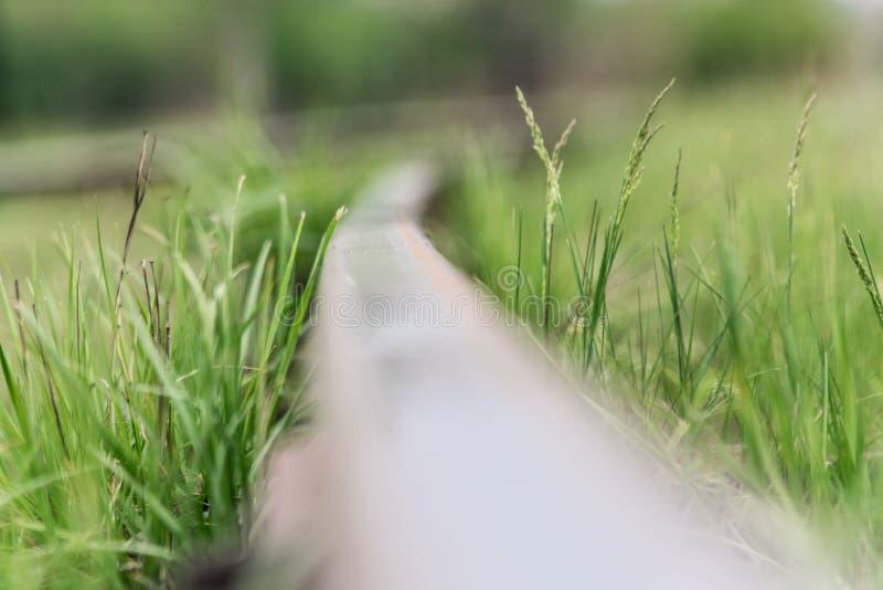 poręcz Natura w «Tekeli « Wiosna kazakhstan zdjęcie stock